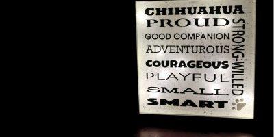 Chihuahua Leuchtbild